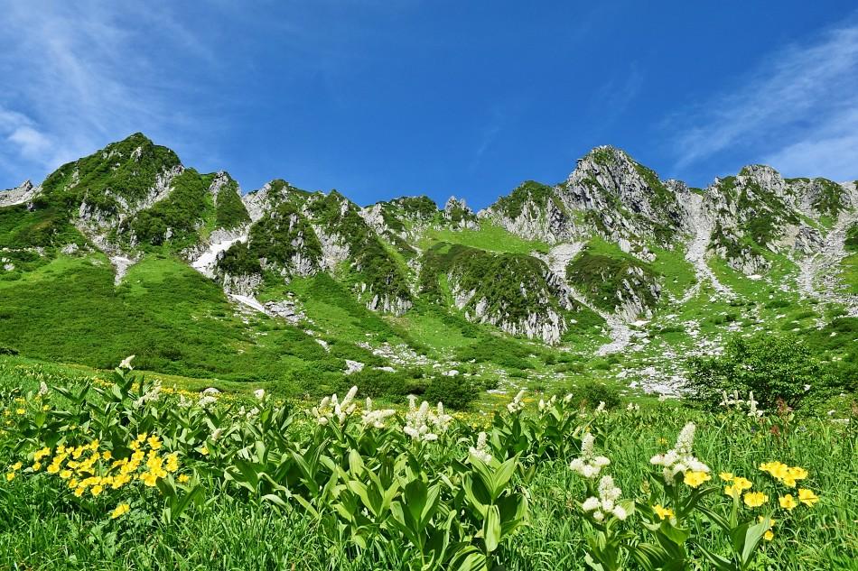 中央アルプス高山植物