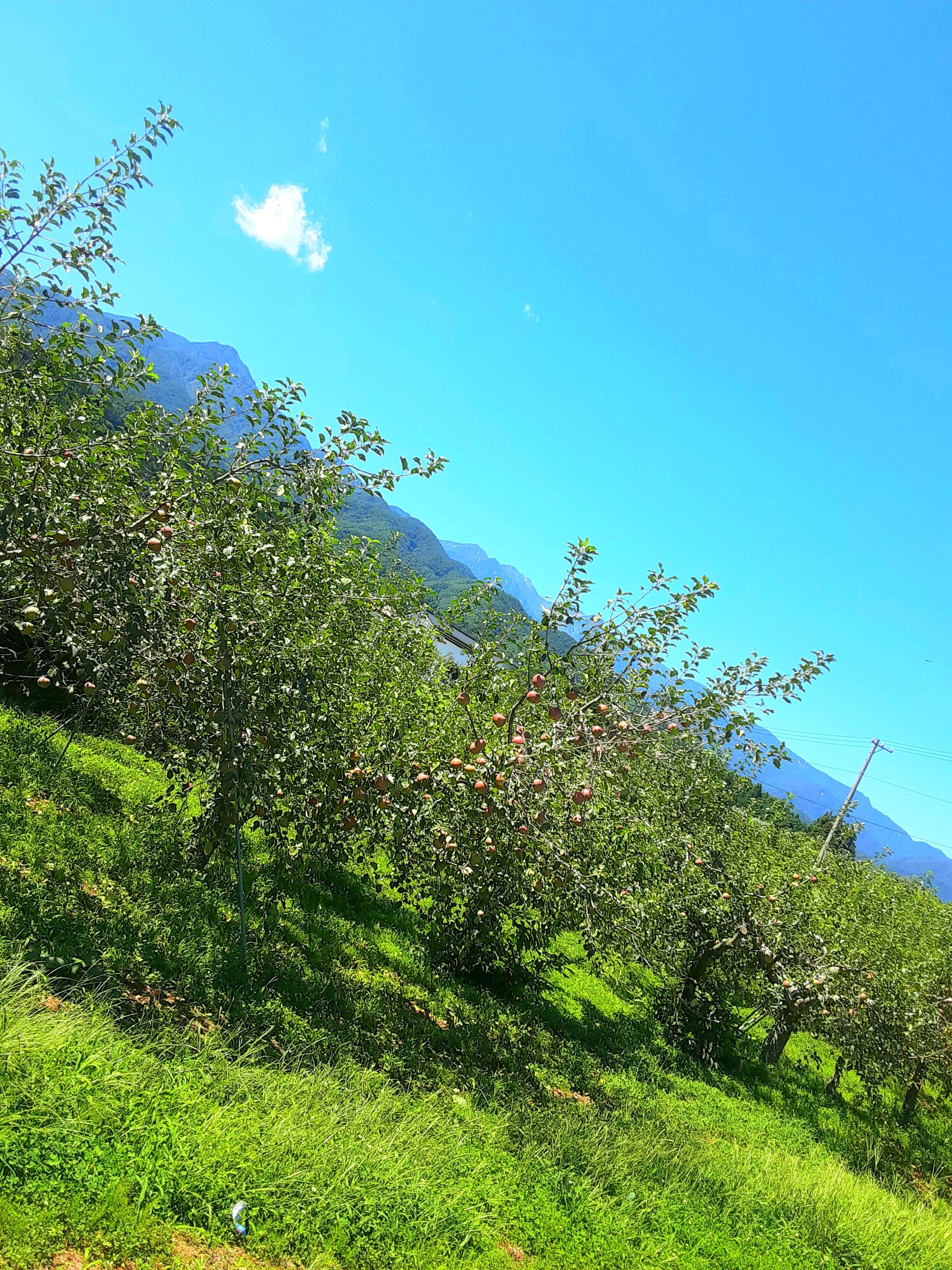 りんご狩り、ぶどう狩り