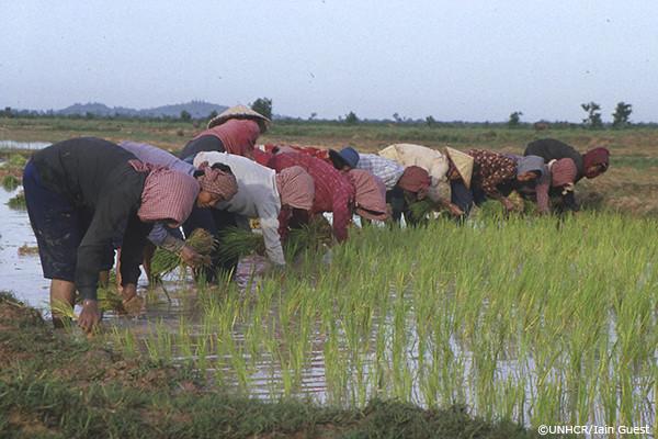 畑を耕すカンボジア帰還民の写真