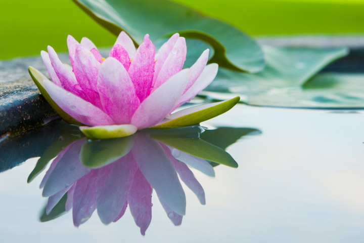 マインドフルネス, 瞑想, 呼吸法
