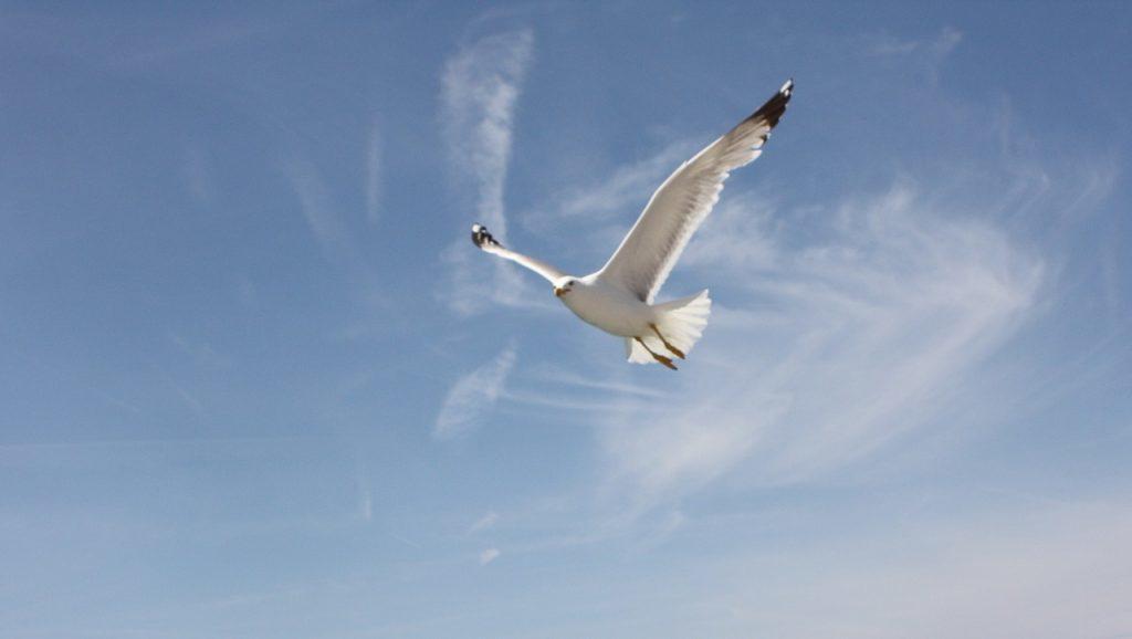 鳥が空を飛ぶ夢