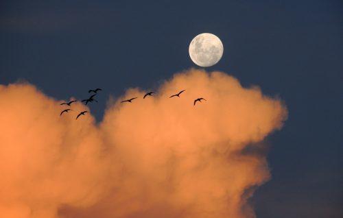 ボイドタイム, とは, 意味, 満月, 新月, 過ごし方, 効果