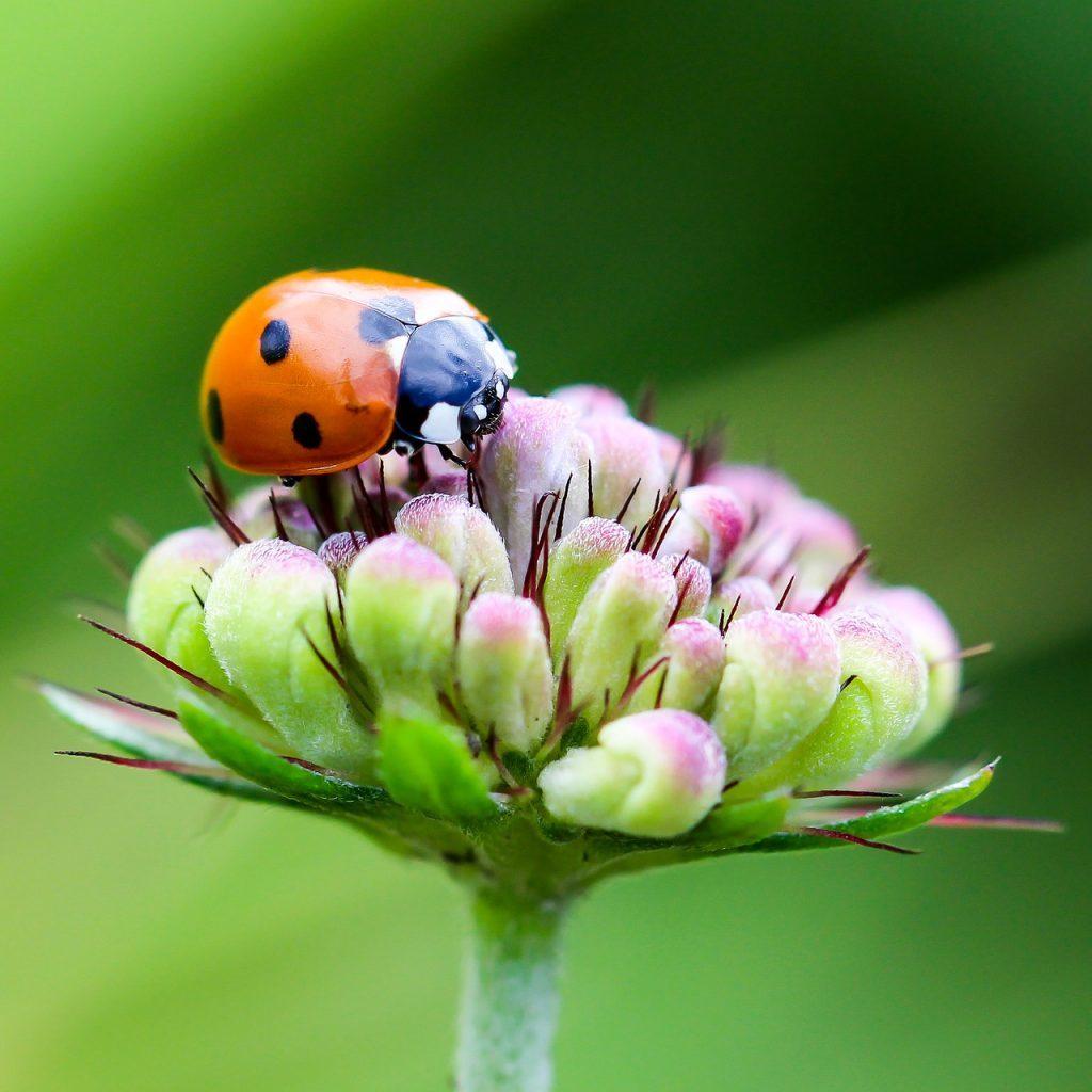 花に止まるてんとう虫