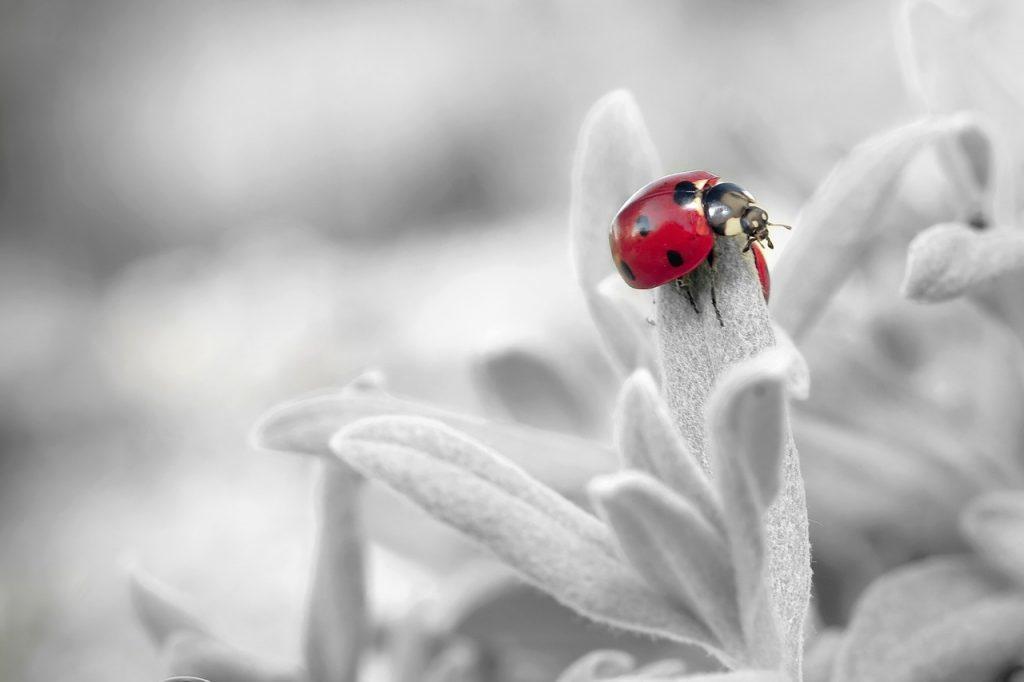 モノクロの背景に赤いてんとう虫がいる