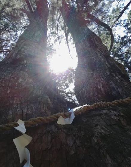 玉置神社は山岳信仰の聖地で日本最強のパワースポット