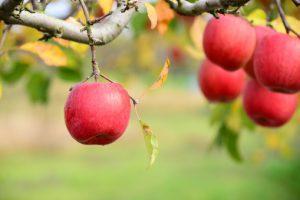 ニュートンのリンゴもセレンディピティ