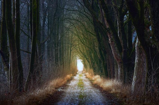 雫石・慰霊の森とは