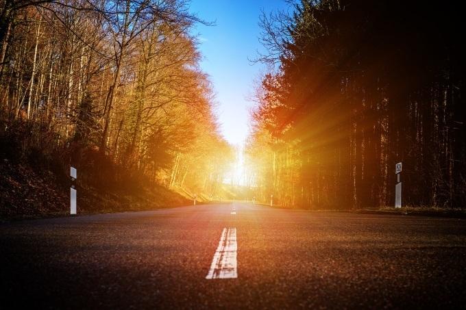 日の当たる林の中の道路