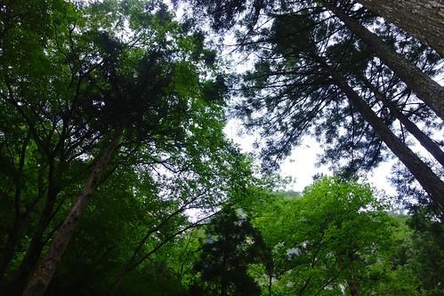 森から空を見上げる