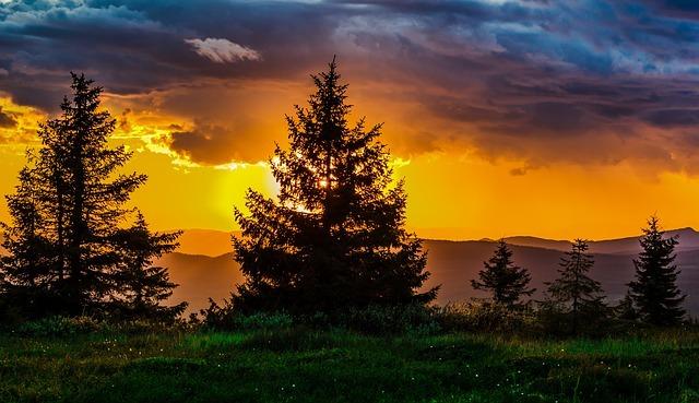 夕焼けの背景に立つ樹