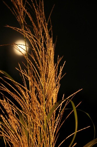 十五夜の月とお月見について