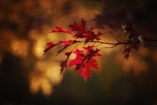 秋分の日の由来