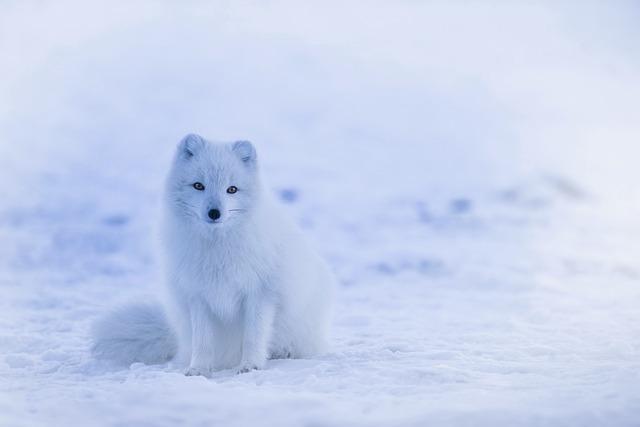 三寒四温の季節①本来の意味では「冬」