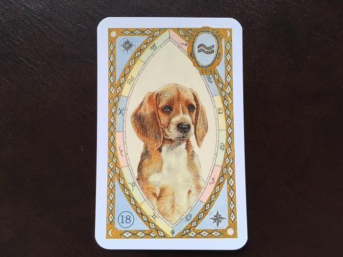 ルノルマンカード・犬はどんな意味?