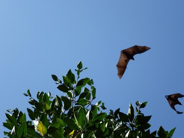 空を飛ぶ蝙蝠