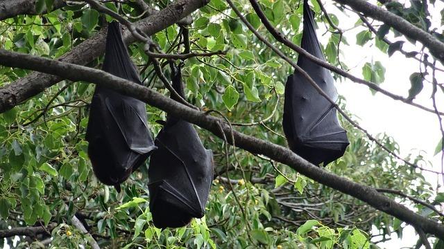 逆さにとまる蝙蝠