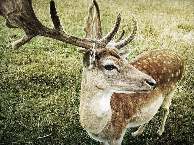 鹿の角のスピリチュアルな意味