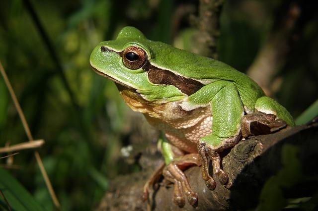 木にとまる蛙