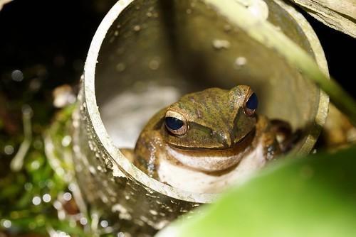 管の中に入る蛙