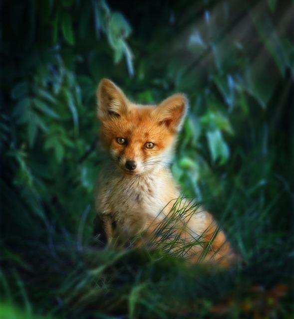 狐の持つスピリチュアルな意味とは?