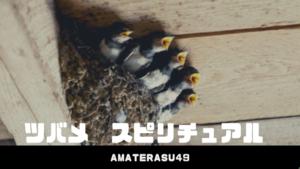 ツバメのスピリチュアルな意味とは?ツバメが巣を作ると縁起がいいのは本当?