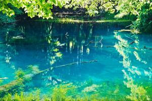 丸池様とは?池自体がご神体?神秘のパワースポット丸池様について解説
