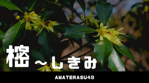 「樒(しきみ)」とは?仏壇に飾る植物について解説。しきみを飾る宗派についても知ろう