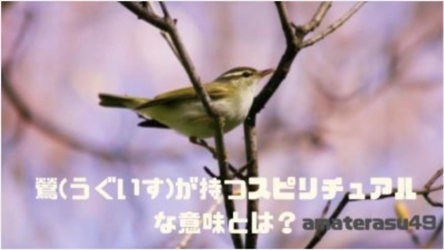 鶯(うぐいす)は幸運の象徴?鶯が持つスピリチュアルな意味とは?