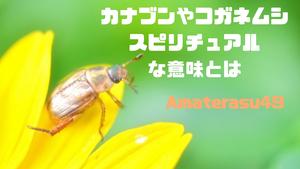 カナブンやコガネムシのスピリチュアルな意味とは?開運を呼ぶ縁起の良い虫