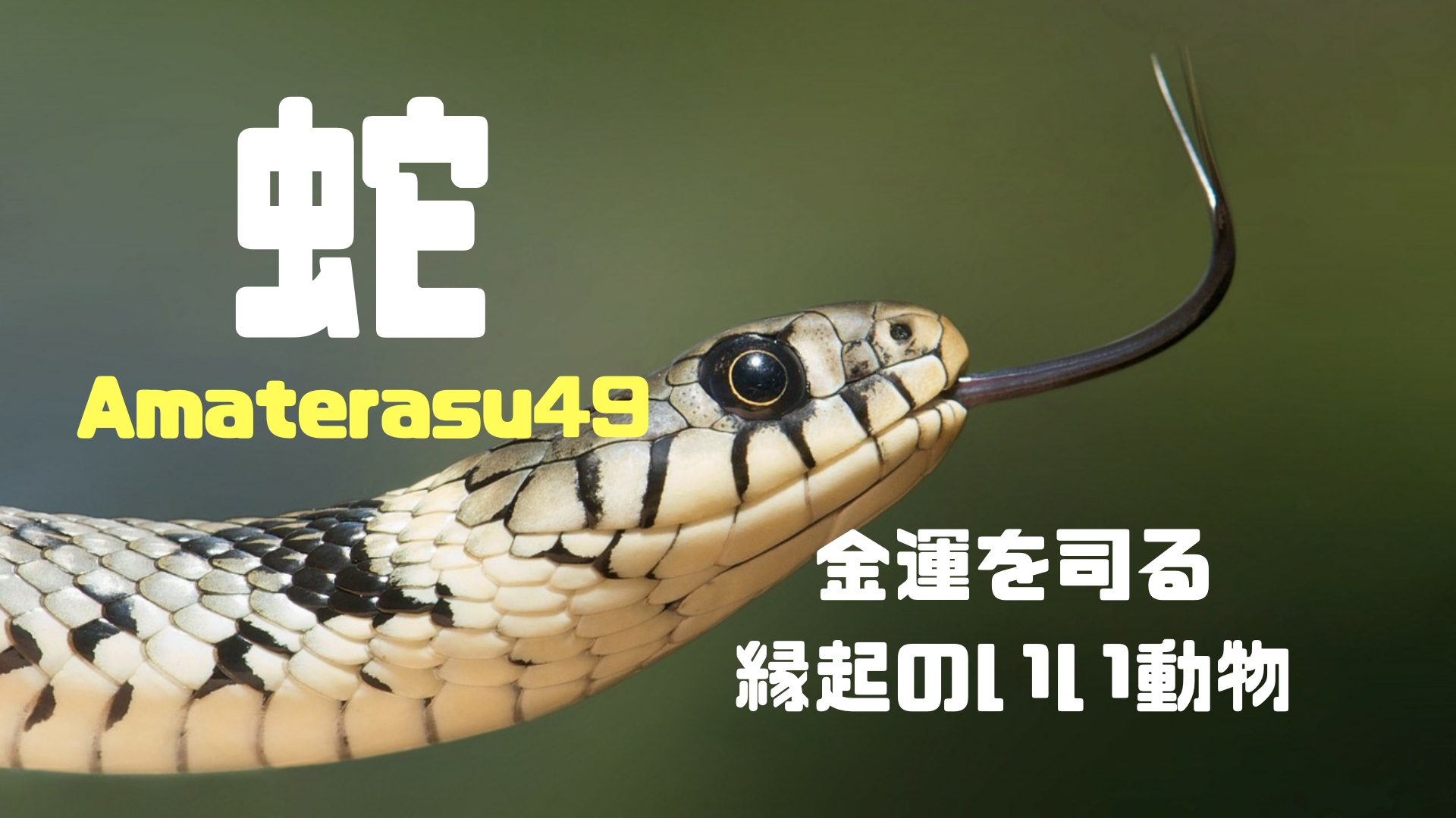 蛇のスピリチュアルな意味について解説!蛇は金運を司る縁起のいい動物?