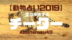 【動物占い2019】<7全力疾走するチーター>の性格・特徴・恋愛運・仕事運と他の動物との相性を解説!