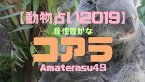【動物占い2019】<10母性豊かなコアラ>の性格・特徴・恋愛運・仕事運と他の動物との相性を解説!