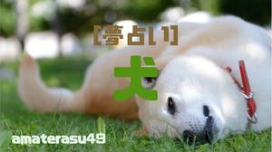 【夢占い】犬の夢を見ることの意味とは?犬の色や行動、状況別に解説!