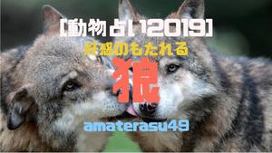 【動物占い2019】<36 好感のもたれる狼>の性格・特徴・恋愛運・仕事運と他の動物との相性を解説!