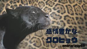 【動物占い2019】<53 感情豊かな黒ひょう>の性格・特徴・恋愛運・仕事運と他の動物との相性を解説!
