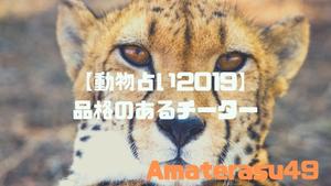 【動物占い2019】<48 品格のあるチーター>の性格・特徴・恋愛運・仕事運と他の動物との相性を解説!