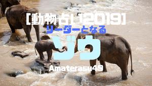 【動物占い2019】<31   リーダーとなるゾウ>の性格・特徴・恋愛運・仕事運と他の動物との相性を解説!