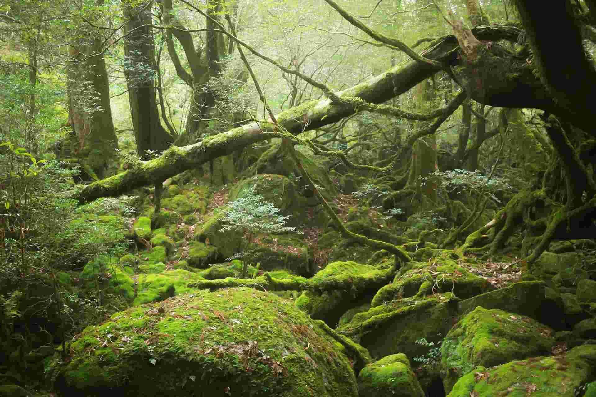 もののけ姫の舞台は屋久島と白神山地 モデルとなった場所や設定を紹介