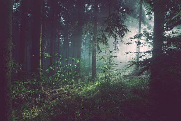 森 事件 なき 叫べ 愛 で 実際 の