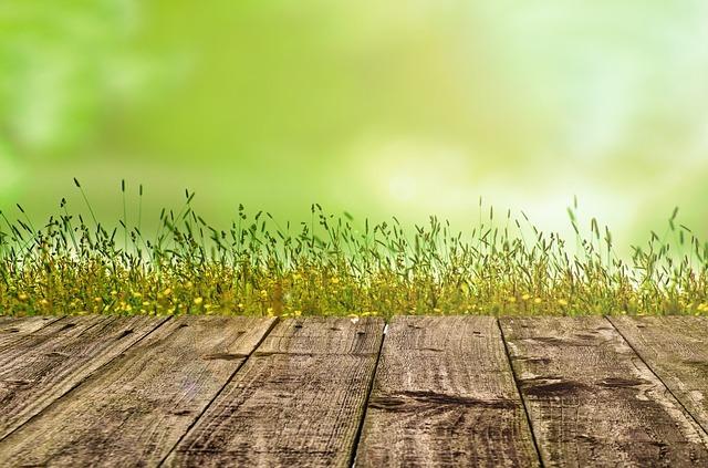 日差しを浴びる草