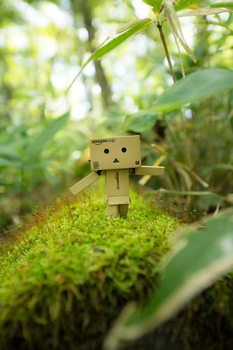 苔のある庭
