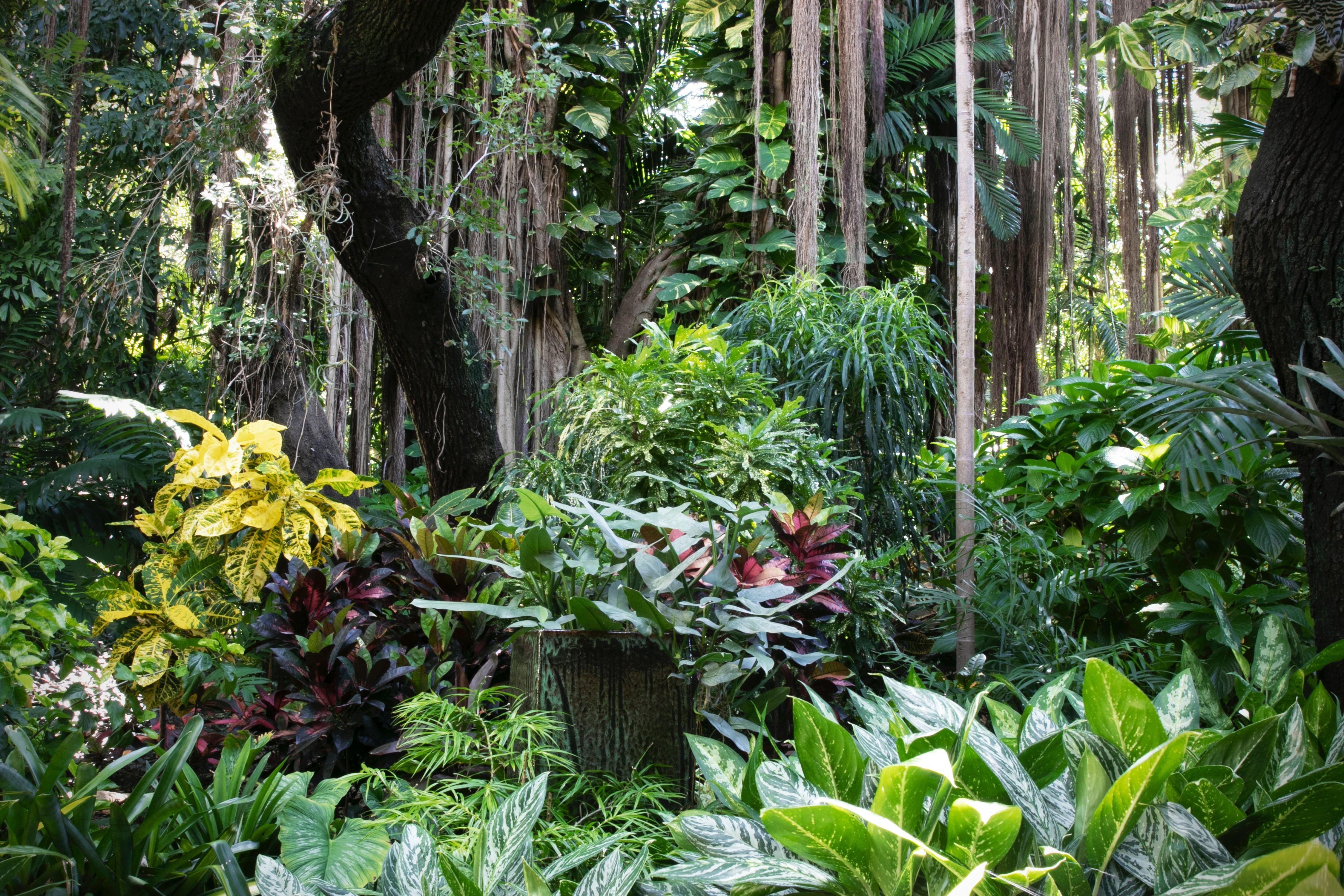 熱帯雨林画像
