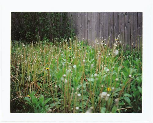 庭の雑草対策!予防から駆除まで雑草を生えなくする方法を紹介