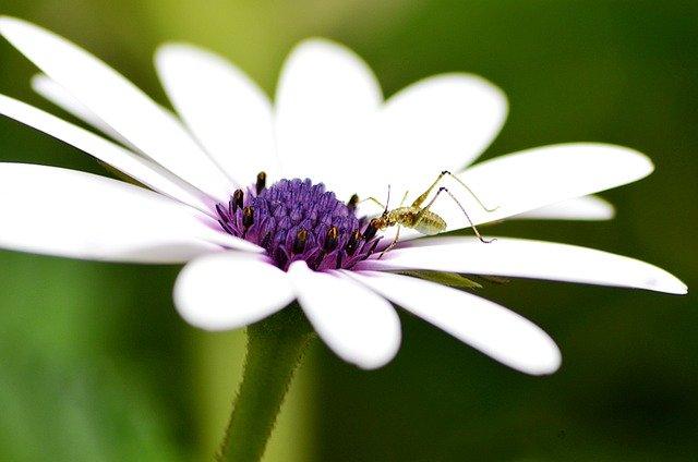 アブラムシの退治・予防対策!花や野菜から駆除するための方法を紹介!