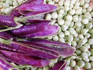 ツタンカーメン豆とは?紫のエンドウ豆の栽培方法や調理方法をご紹介!