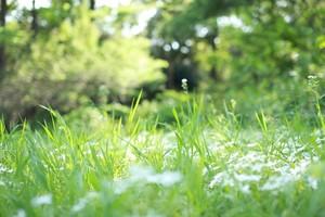 除草剤を使わずに庭の雑草を生えなくする方法9選!効果的な方法はどれ?