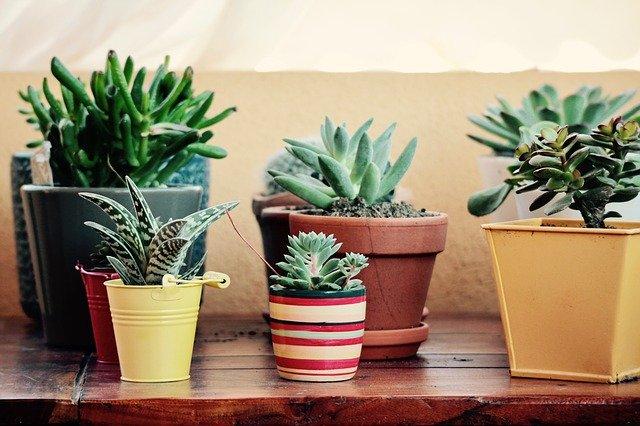おしゃれな植木鉢おすすめ10選!安くて通販でも買える人気商品はコレ