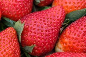 イチゴの水耕栽培!家庭で種から収穫まで育てるコツは何?注意点も紹介!
