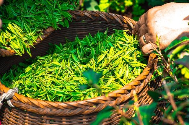 お茶の花とは?その特徴や花言葉・開花時期を紹介!白ツバキに似ている?