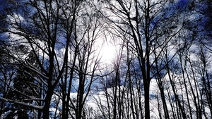 カラスザンショウとは?新芽がタラの芽にも似ていると噂の樹木をご紹介!